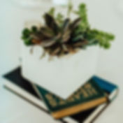 Let's make every Sunday #succulentsunday