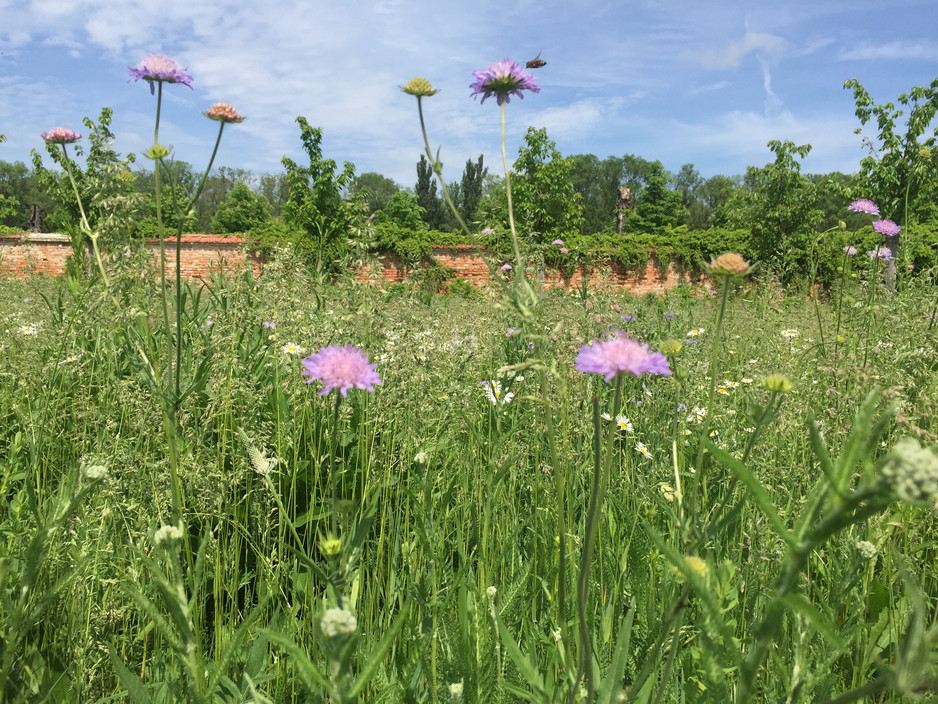 Herbal answers to hay fever.