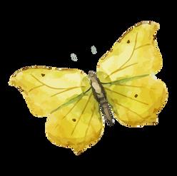 Butterflies + Bees