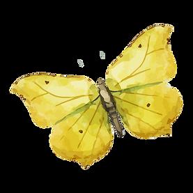 Acquerello Farfalla 8