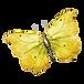 Watercolor Butterfly 8