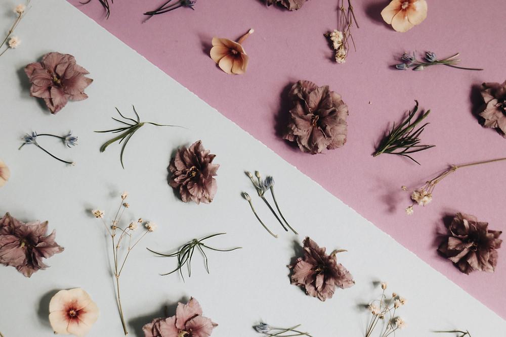 herbs supplement protocol fatigue autoimmune