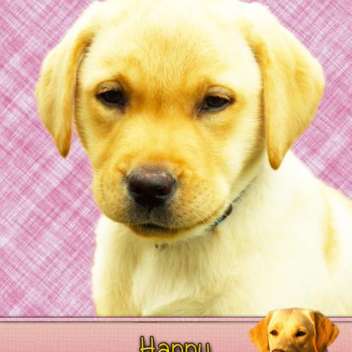 Golden Labrador Birthday Cards Giftsbobs