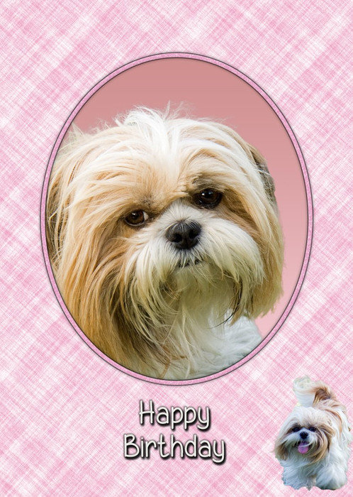 Shih Tzu Birthday Card