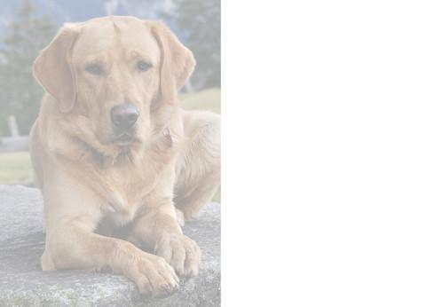 Golden Labrador Dog Birthday Card