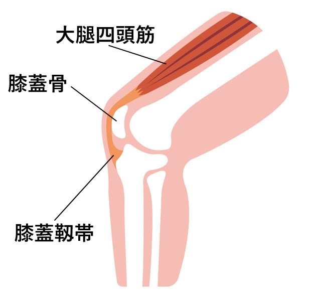 膝が痛くなる原因