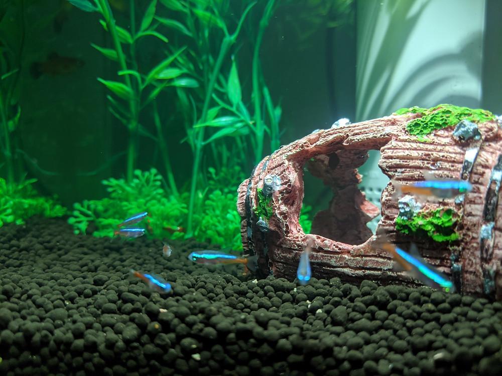 水槽の中を泳ぎ回る熱帯魚