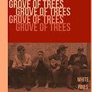 groove of trees.jpg