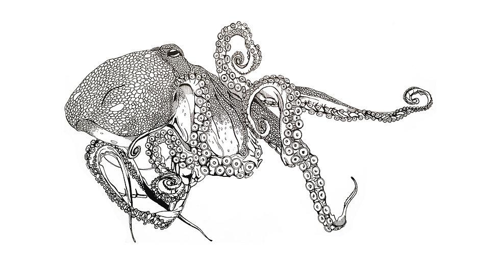 Octopus_SKETCH-01.jpg