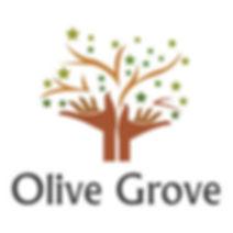 olive grove.jpg