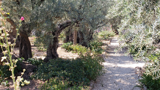 A Holy Walk