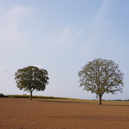 eenzame bomen