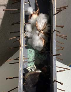 Cotton economy detail