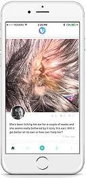 TapVet dog ear problem post