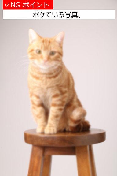 猫サンプル3有賀さんK18A.jpg