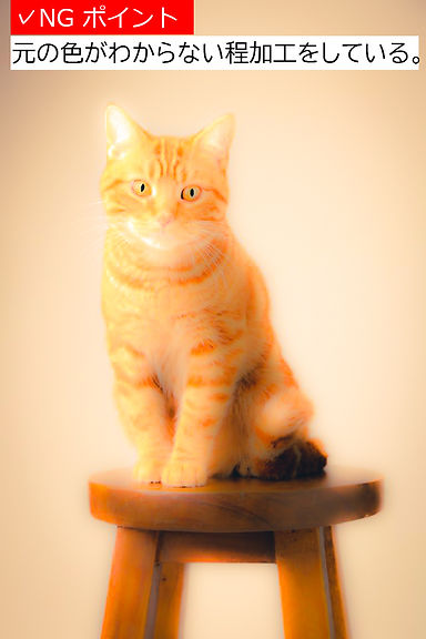 猫サンプル2有賀さんK18A.jpg