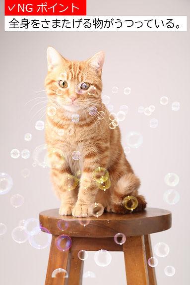 猫サンプル1有賀さんK18A.jpg