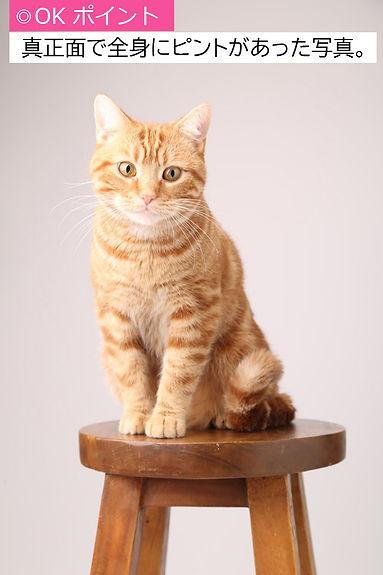 猫サンプル0有賀さんK18A.jpg