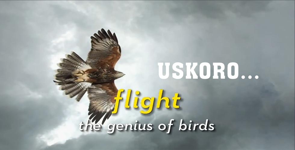 Ptice - Inteligentna bića