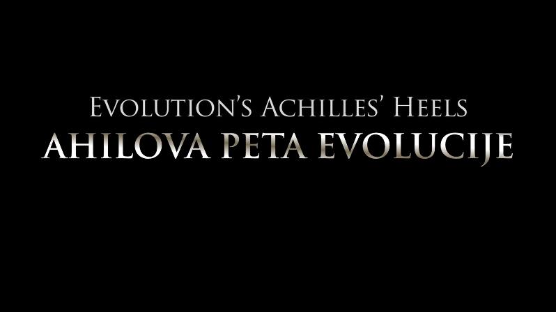 Ahilova peta evolucije