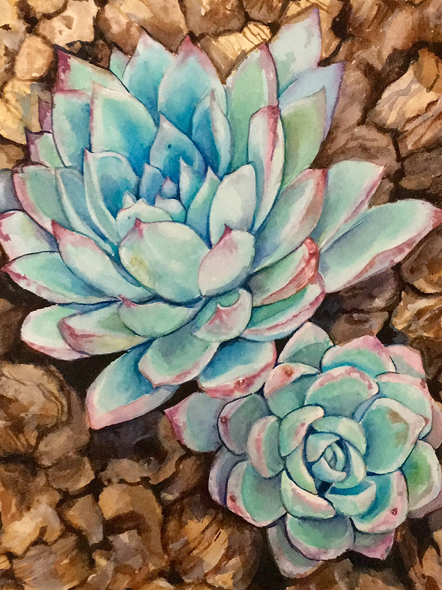 Succulents in Wood Chips