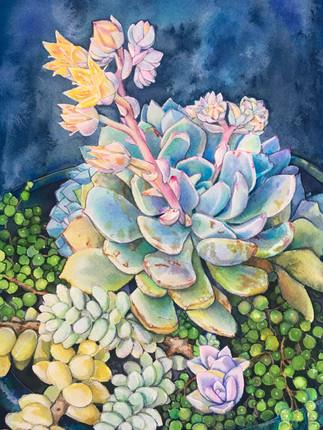 Succulent Dream