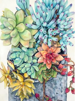 Succulents in Stone Vase