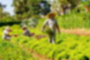 Horta Pousada Paiol em Atibaia
