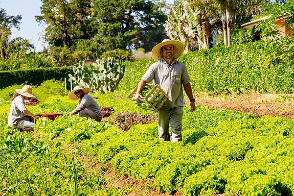 Cultivo de hortaliças e legumes na Horta da Pousada e Restaurante Paiol em Atibaia