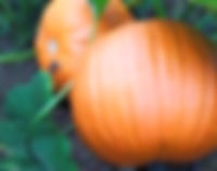 pumpkin_edited.jpg