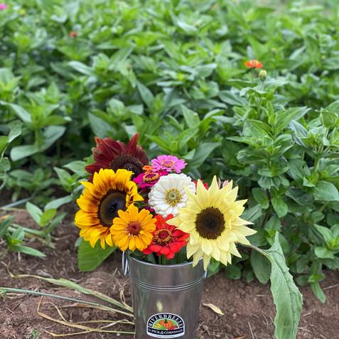Sunflower & Zinnia Festival