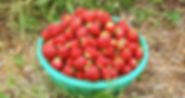 strawberries3_edited.jpg