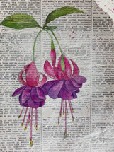 Fuschia Painting