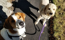 Dog Walker in Milton, Massachusetts