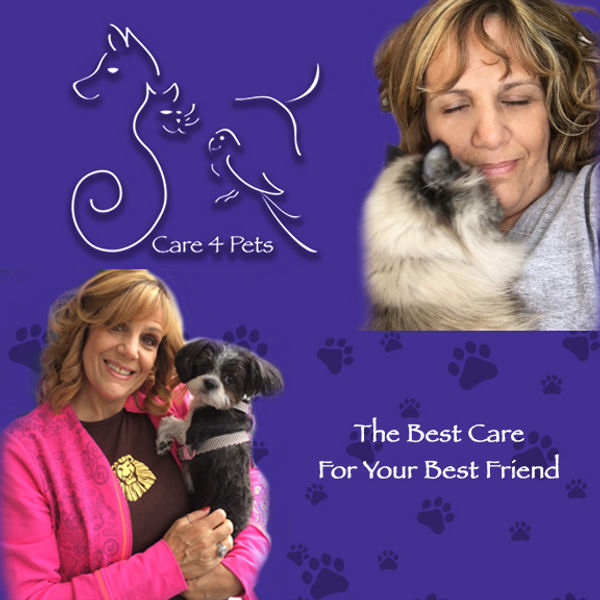 care 4 pets web top.jpg