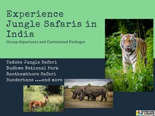 Jungle Safaris in India