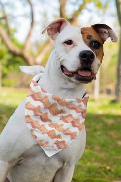 sublimated-bandana-for dog