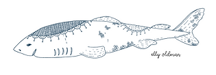 requin napperon2.png