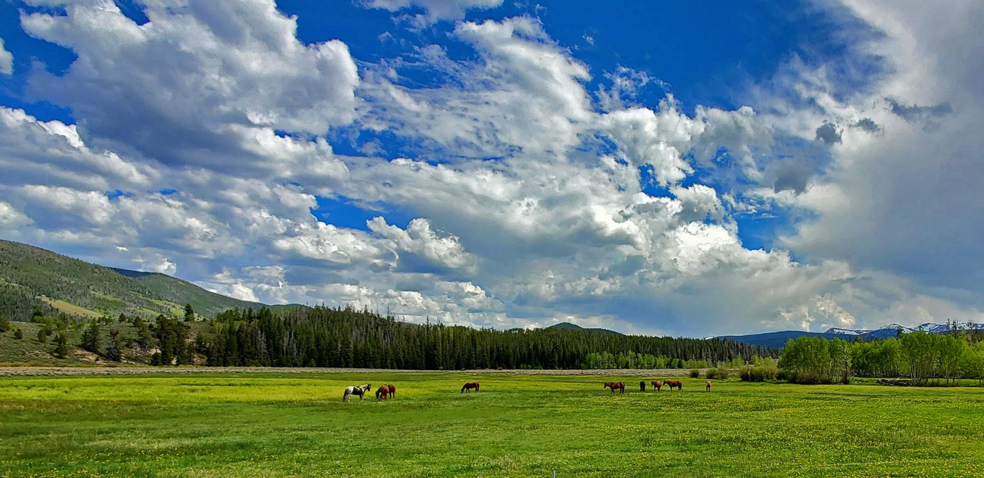 Rose Valley Ranch