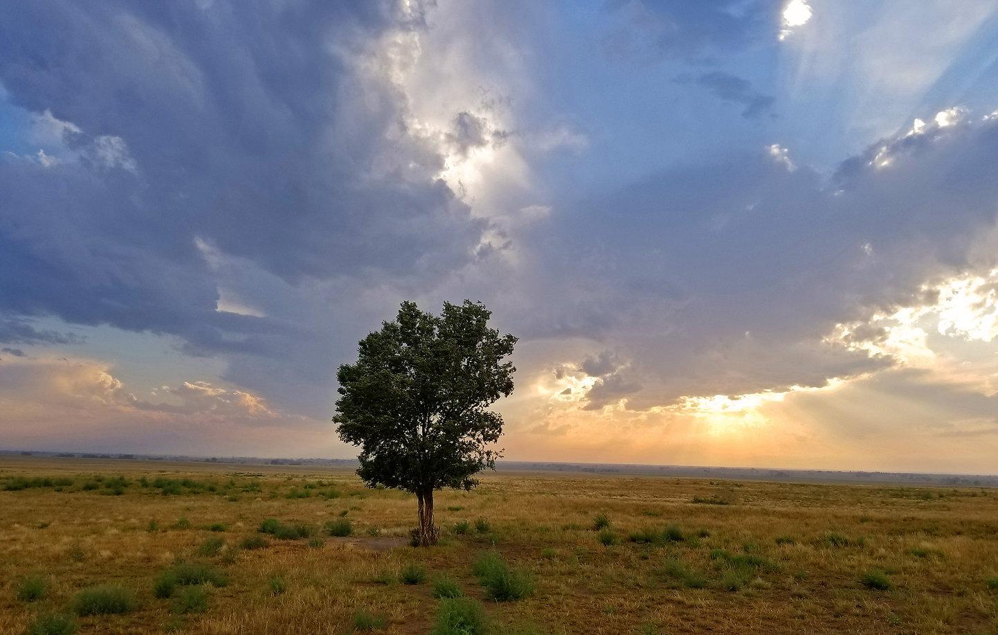 SunsetTree.jpg