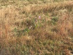 Lone Flowers in a Field