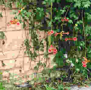 inspiration, nature walk, florals
