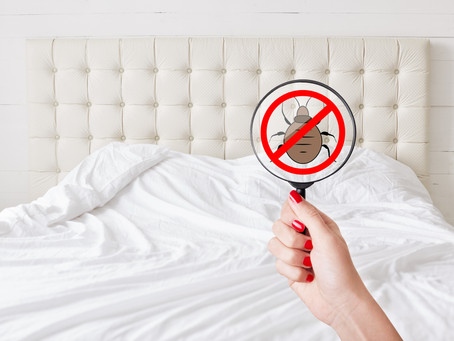 Hotel Bed Bugs and the Top 3 Ways to Avoid Them