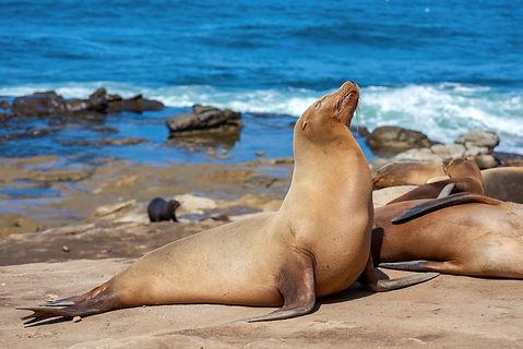 animais marinhos - resgate LEC.jpg