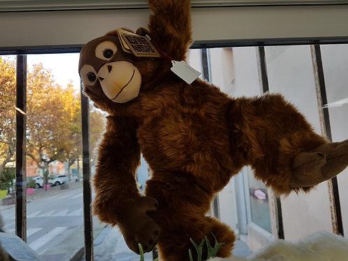 Chimpanzé Caramel