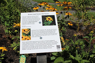 NB Literature Garden Black Eyed Susans