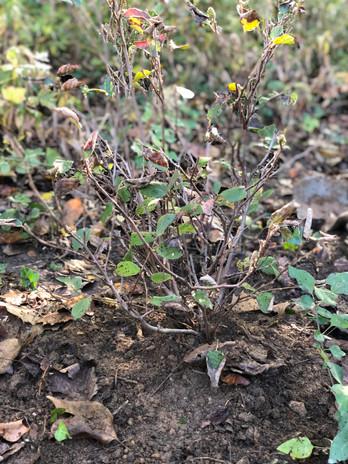 Bog garden 10_19