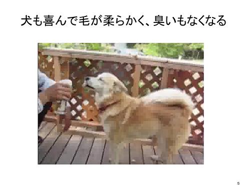 犬も喜んで.png