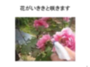 花がイキイキ.png