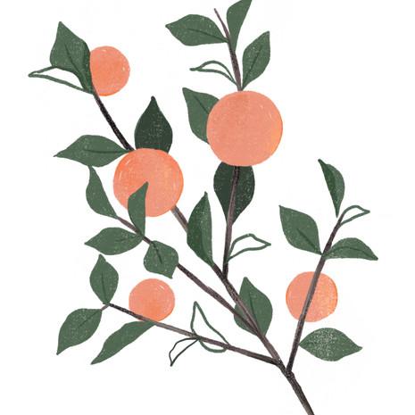 Peach Branch Art Print